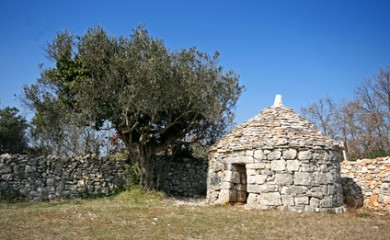 Istrian shelter kazun, stonewall and the olive tree